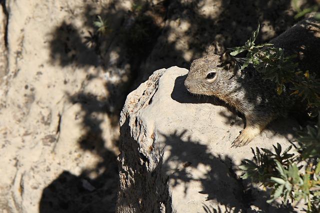 Grand Canyon Camping Trip squirrel