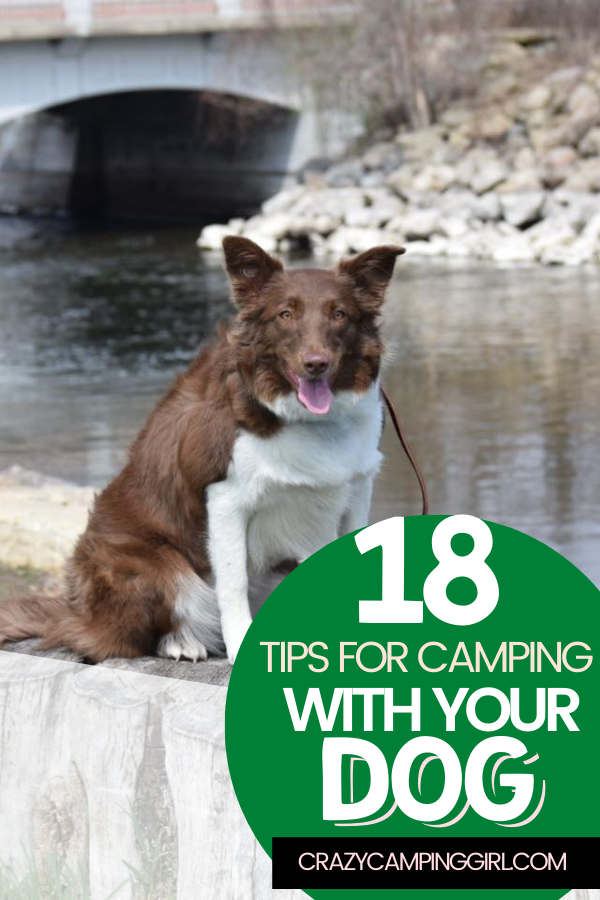 18 Tips for Camping with Your Dog